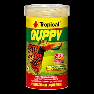 Tropical Guppy