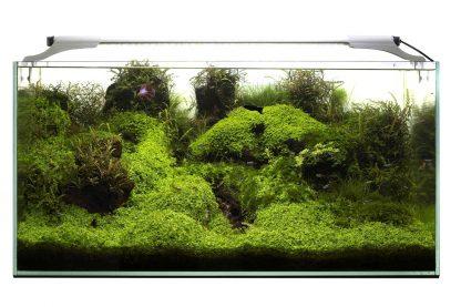 Aquael leddy slim sunny/plant