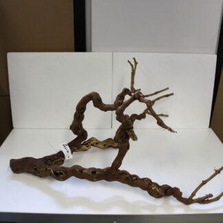 viinipuu